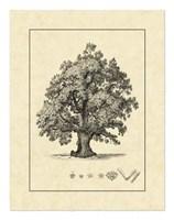 Vintage Tree III Fine-Art Print