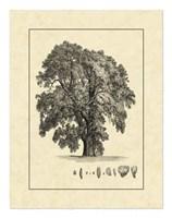 Vintage Tree IV Fine-Art Print