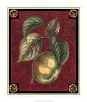 Pomme De Canada Fine-Art Print