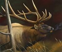 Elk Portrait II Fine-Art Print