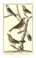 Bird Family I Fine-Art Print