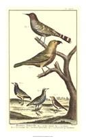 Bird Family II Fine-Art Print