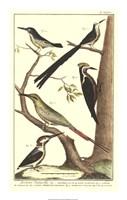 Bird Family III Fine-Art Print