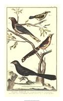 Bird Family IV Fine-Art Print
