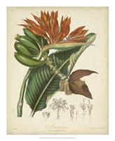 Botanicals III Fine-Art Print