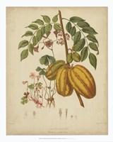 Botanicals V Fine-Art Print