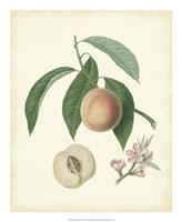 Plantation Peaches I Fine-Art Print