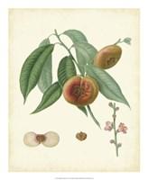 Plantation Peaches II Fine-Art Print
