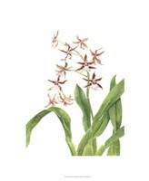 Orchid Study III Fine-Art Print