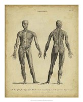 Anatomy Study IV Fine-Art Print