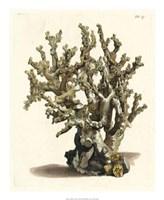 Antique Coral II Fine-Art Print