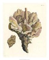 Antique Coral III Fine-Art Print