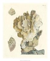 Antique Coral IV Fine-Art Print