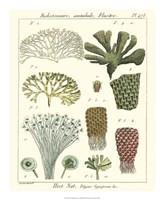 Coral Classification I Fine-Art Print