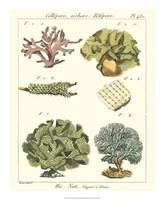 Coral Classification II Fine-Art Print