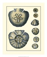 Antique Blue Sanddollar Fine-Art Print
