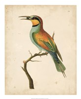 Tropical Bird I Fine-Art Print