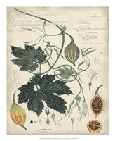 Botanical by Descube I Fine-Art Print