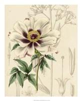 Floral Pairings II Fine-Art Print