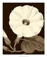 Glorious Blooms I Fine-Art Print