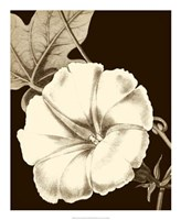 Glorious Blooms II Fine-Art Print