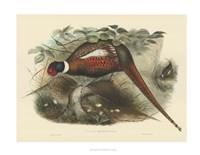 Pheasants II Fine-Art Print