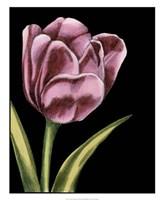Vibrant Tulips III Fine-Art Print