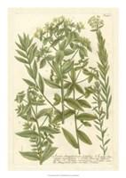 Weinmann's Garden V Fine-Art Print