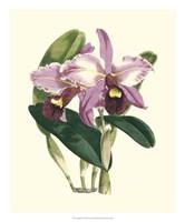 Magnificent Orchid III Fine-Art Print