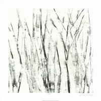 Birches I Fine-Art Print