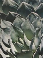 Agave I Fine-Art Print
