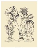 Black and White Besler Peony IV Fine-Art Print