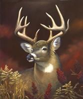 Deer Portrait Fine-Art Print