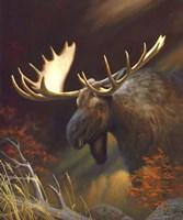 Moose Portrait Fine-Art Print