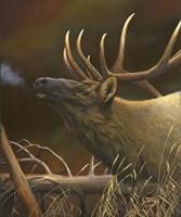 Elk Portrait I Fine-Art Print