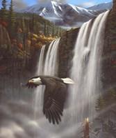 Eagle Portrait Fine-Art Print