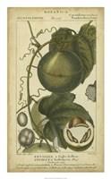 Exotic Botanica I Fine-Art Print