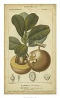 Exotic Botanica II Fine-Art Print