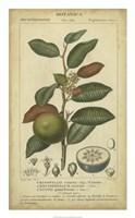 Exotic Botanica III Fine-Art Print