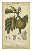 Exotic Botanica IV Fine-Art Print