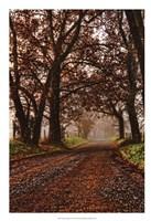 Morning on Sparks Lane II Fine-Art Print