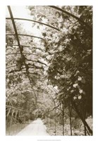 Royal Botanical Garden, Madrid Fine-Art Print