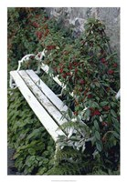White Bench Fine-Art Print