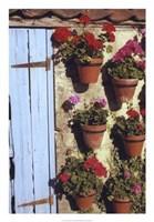 Geranium Wall Fine-Art Print