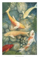 Reflecting Koi II Fine-Art Print