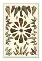 Shell Collection II Fine-Art Print