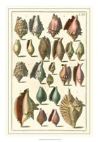 Shell Collection III Fine-Art Print