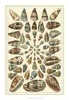Shell Collection V Fine-Art Print