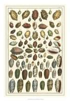 Shell Collection VI Fine-Art Print