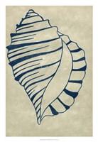 Indigo Shell V Fine-Art Print